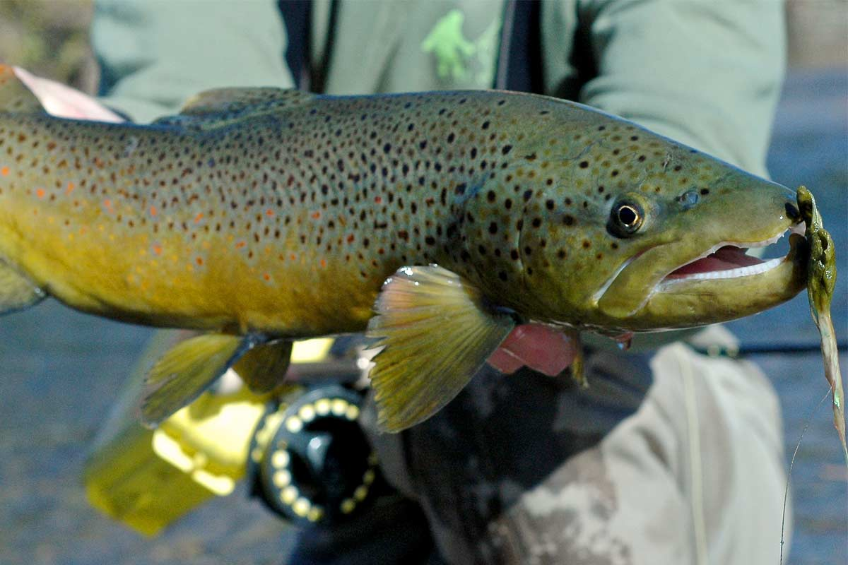 Rayner-Ranch-Colorado-Recreational-Ranch-for-Sale-9-Brown-Trout