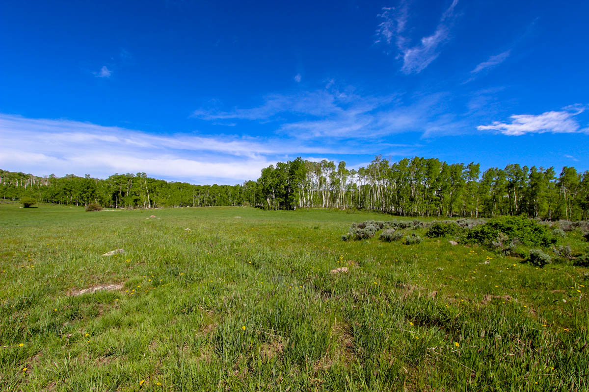 Chedsey-Creek-Ranch-for-Sale-03