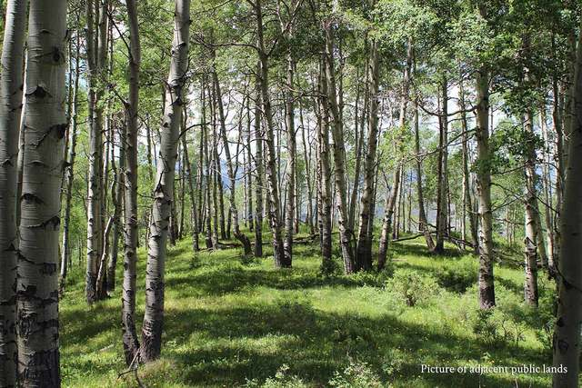 Forest for wildlife