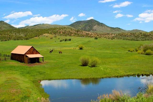 Herd of horses roaming free