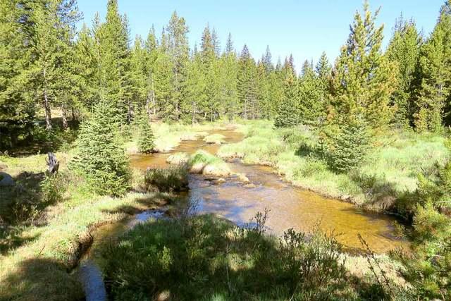 timber skirting the creek
