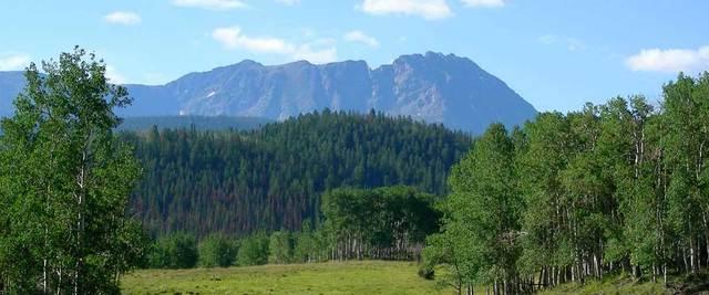 Aspens below mountain side