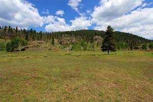 Pine & Aspen Forest