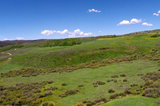 A Grassy Meadow and Forested Hillside